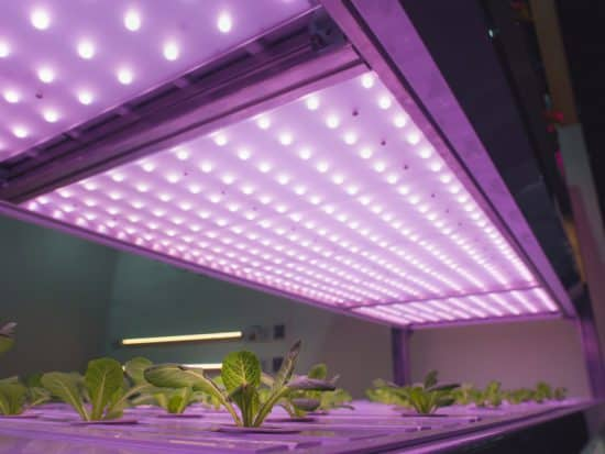 Best Indoor Growing Lights