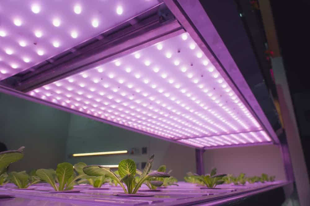 Best Indoor Growing Lights