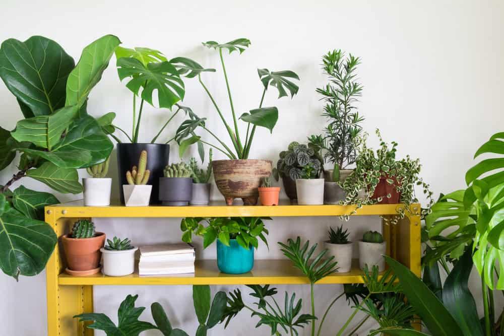 Cactus with houseplants