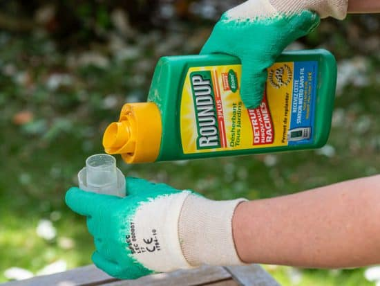 Gardener using Roundup herbicide