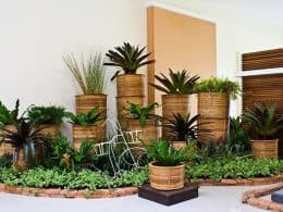 Indoor-Plants-1