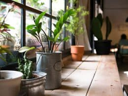 Indoor Plants 2