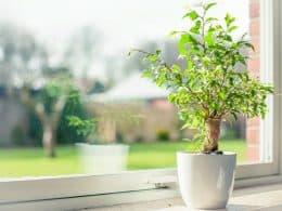 Plant Under Sunlight