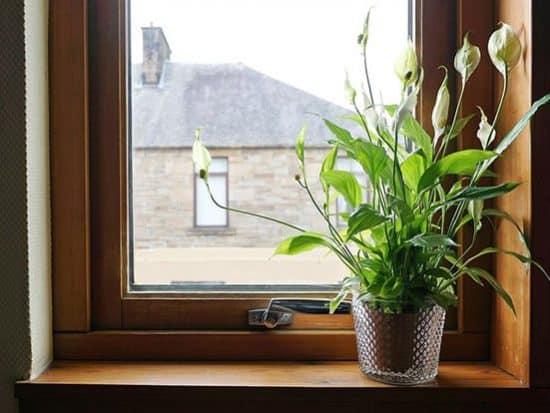 Workhorse plant