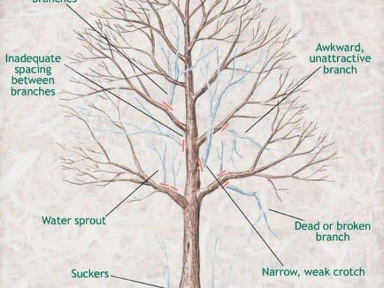 branch cut