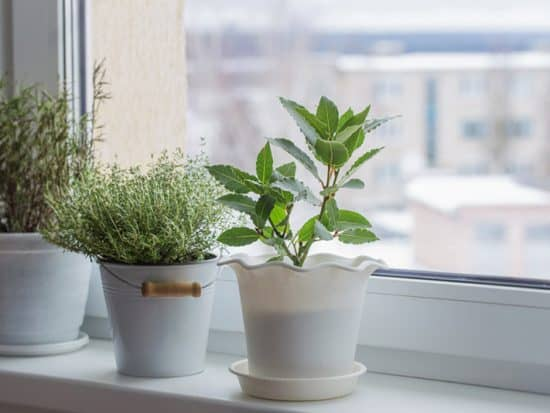 green plants on the windowsill in winter