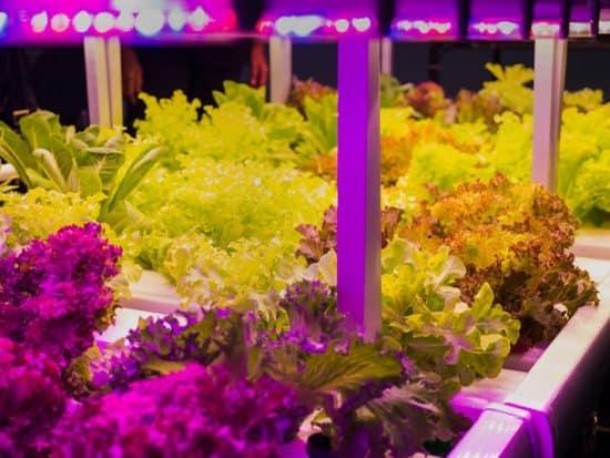 indoor growing light