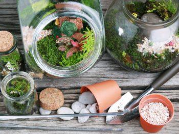 Bottle terrarium with Miniature succulent plants