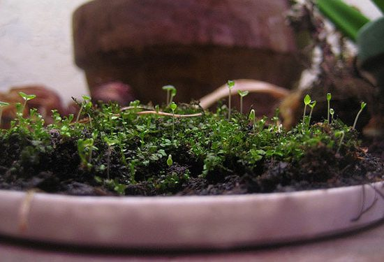 Container lid of moss