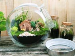 Grow Moss Indoors