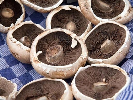 Mushroom Spores