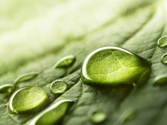water on a green leaf