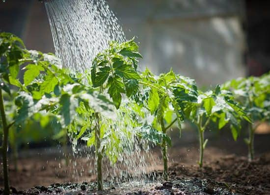 watering plants 1