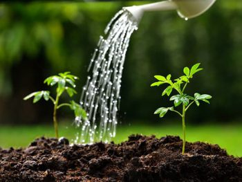 watering plants 2